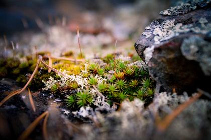Mini Cacti